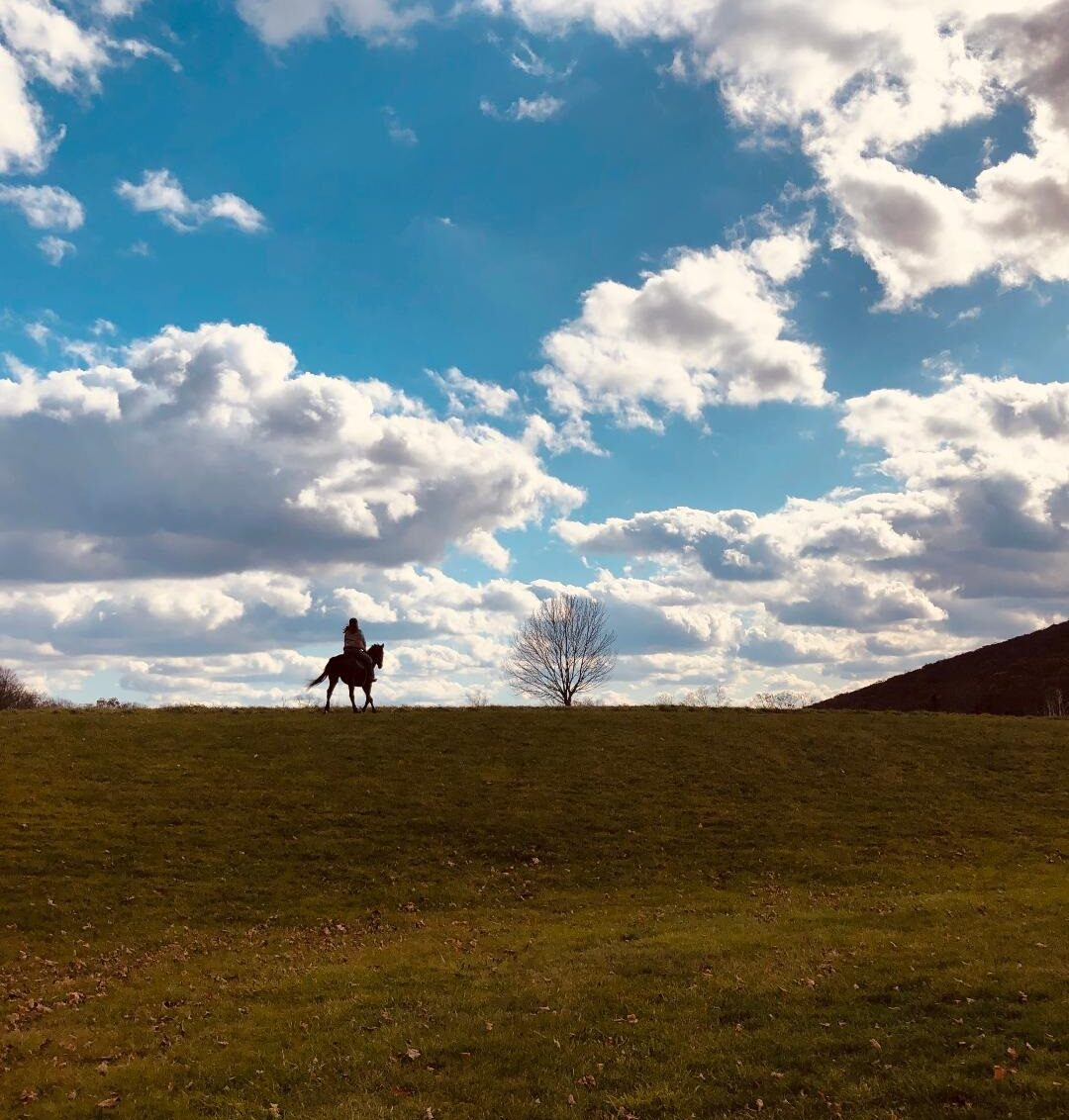 Equuscise